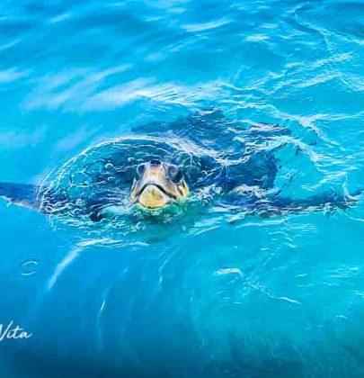 Op zoek naar schildpadden – Zakynthos Part IV