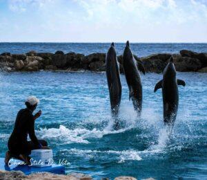 Dolfijnen spotten